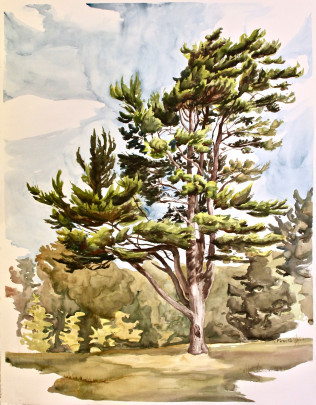 "North Lawn Tree  50"" x 40""  watercolor on paper 2018 by R. Finn"