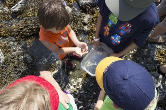 Children exploring tide pools at Family Nature Camp