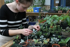 Work study student, Emily Michaud, caring for the succulent collection