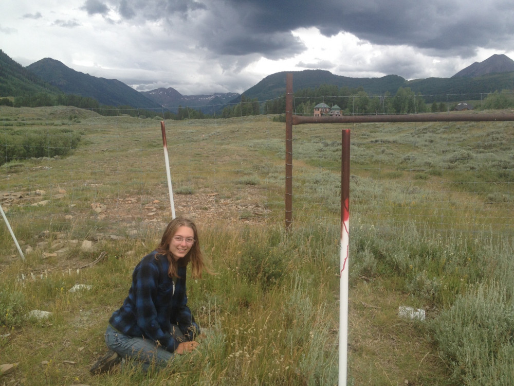 Working at a reciprocal transplant garden in Crested Butte, CO.