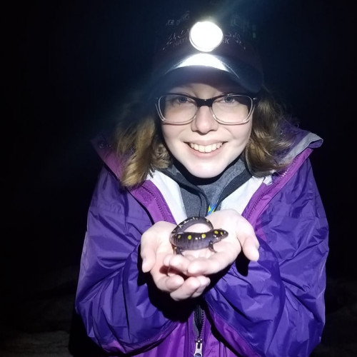 Doing spotted salamander research in Acadia NP