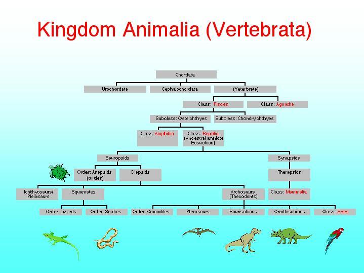Images Of Animalia Kingdom Examples Spacehero